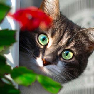 Как защитить растения от домашних животных